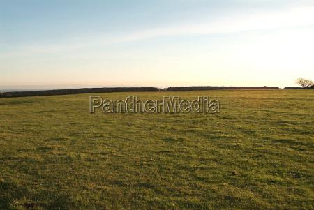 pasture 7