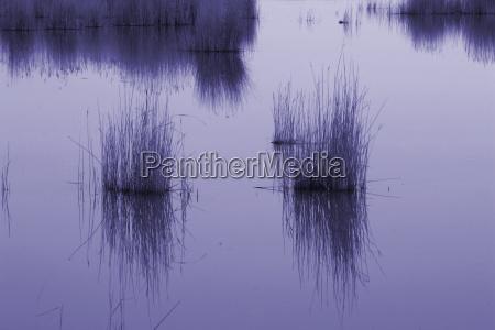 seagrass blue