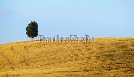 summer straw on field