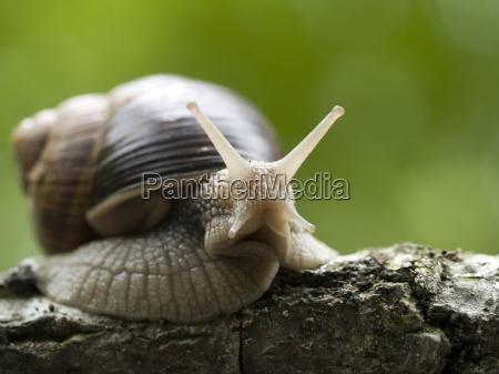 snail - 349358