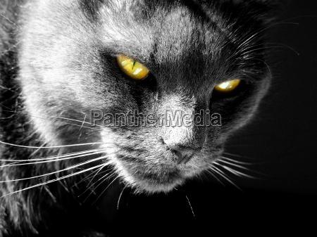 fire, eyes - 355906