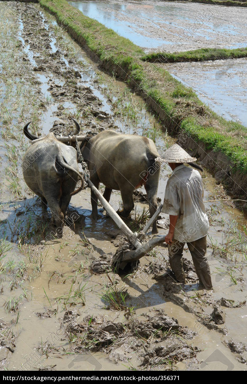water, buffalo, 2 - 356371
