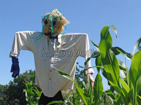 scarecrow - 363445