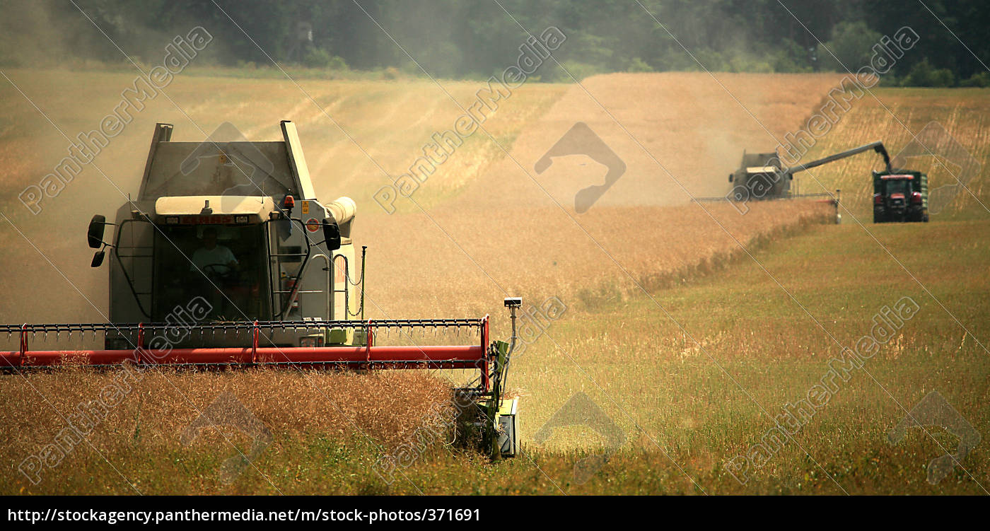 harvest - 371691