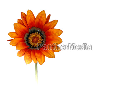 lunch, flower, on, the, day, (approx. - 373565