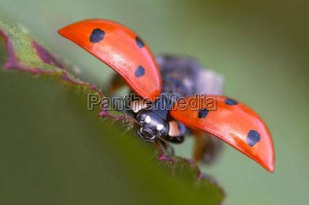 ladybug, fly, ... - 377597