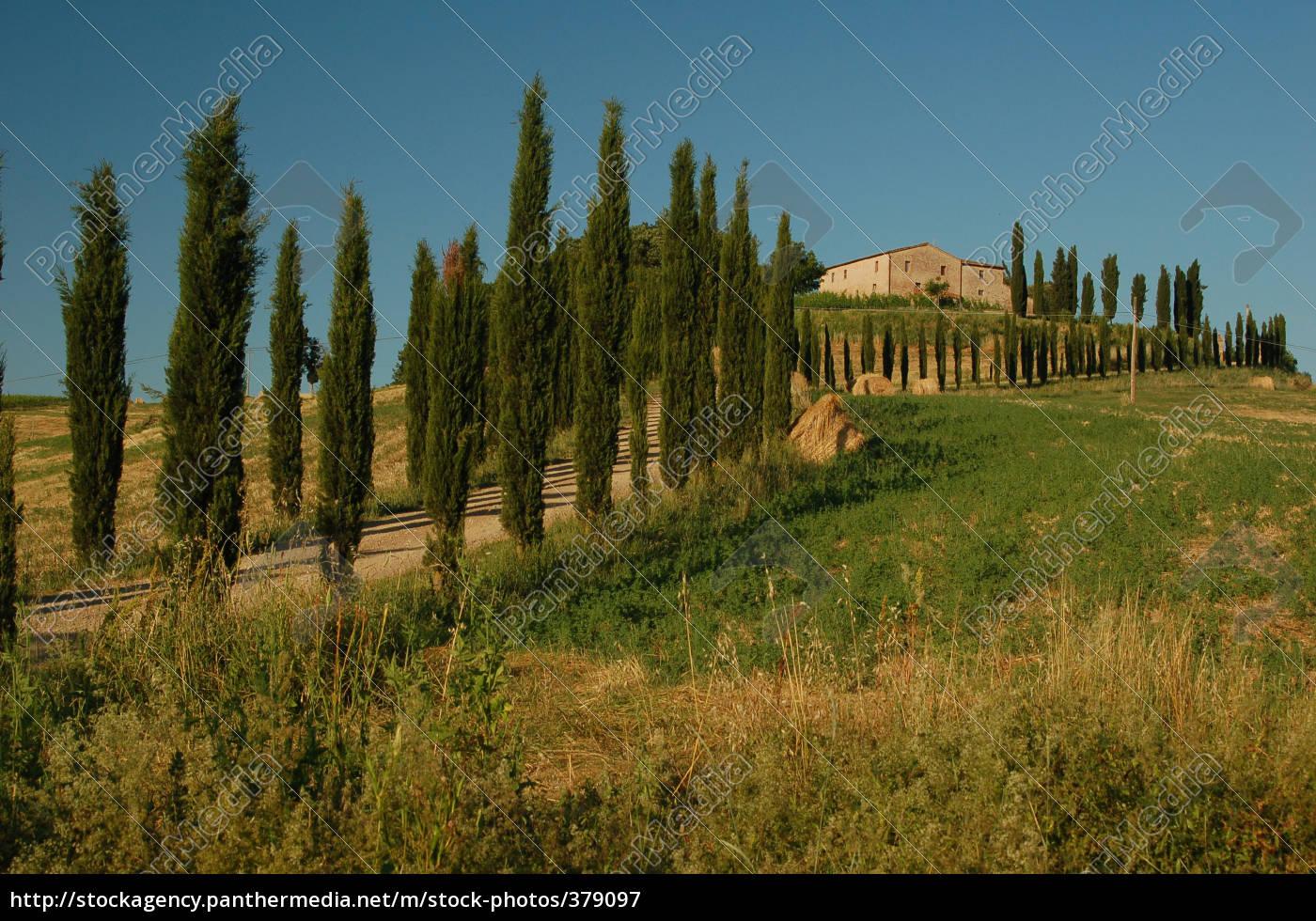 cypresses - 379097