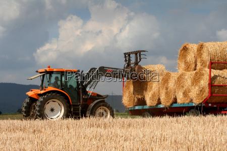 harvest - 379467