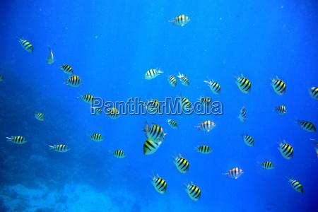 environment enviroment animals depth depths egypt