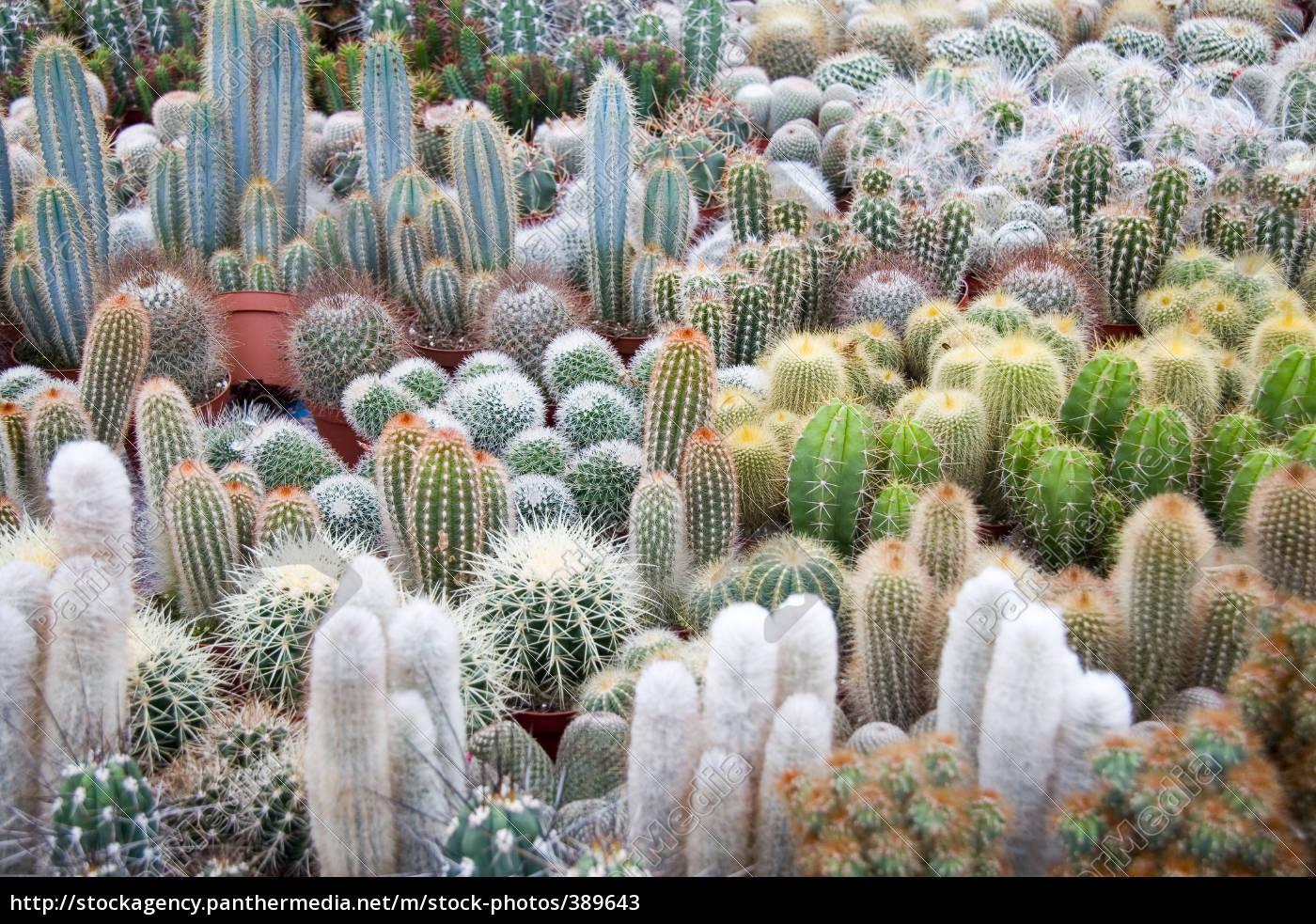 cactus, sea - 389643