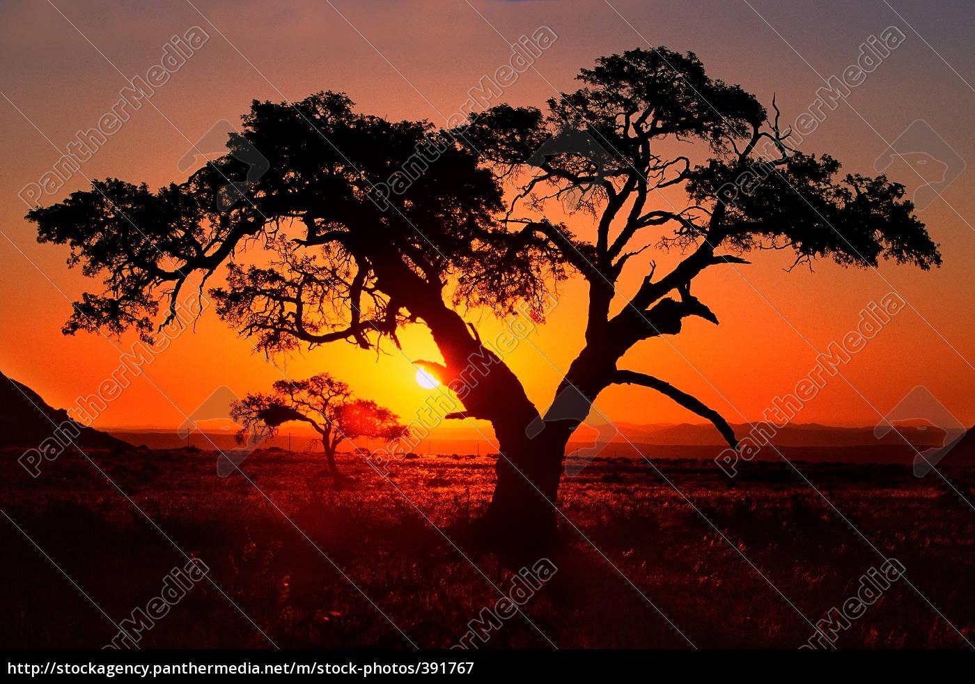 desert, tree - 391767