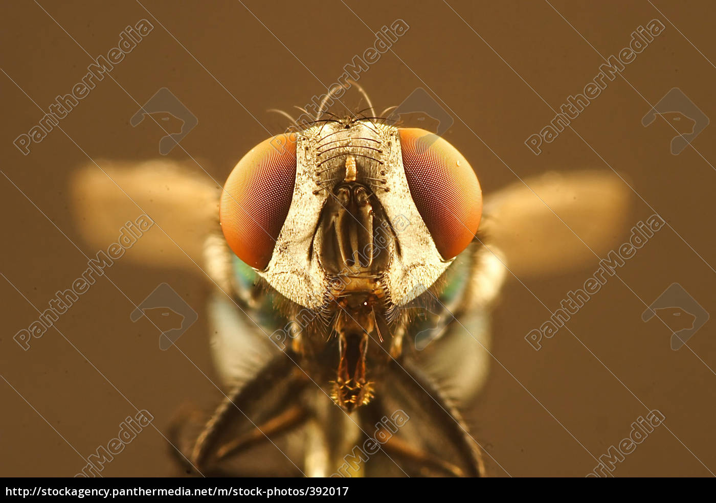 fly, with, gaping, feeding, tool - 392017