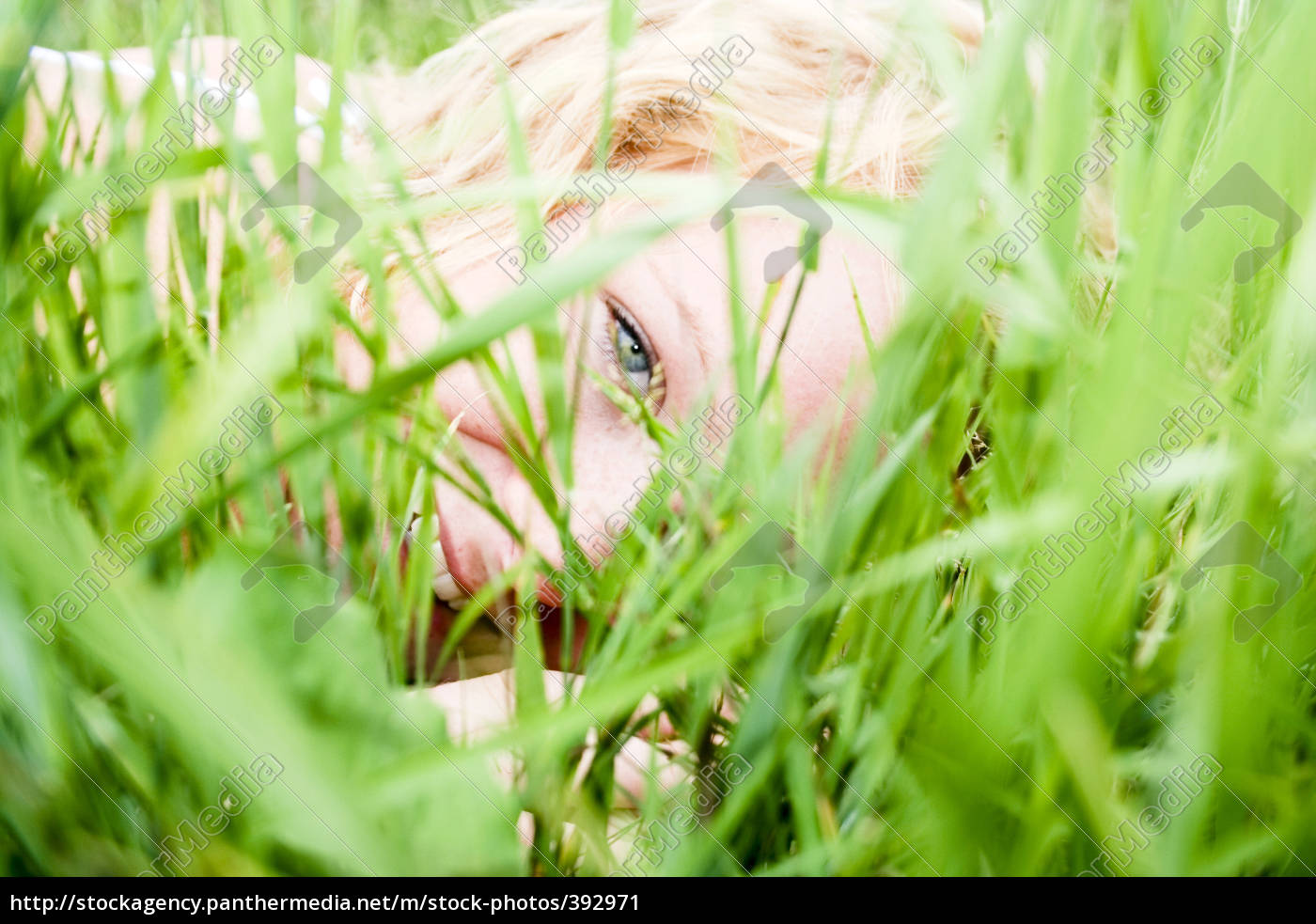 looking, through, the, grass - 392971