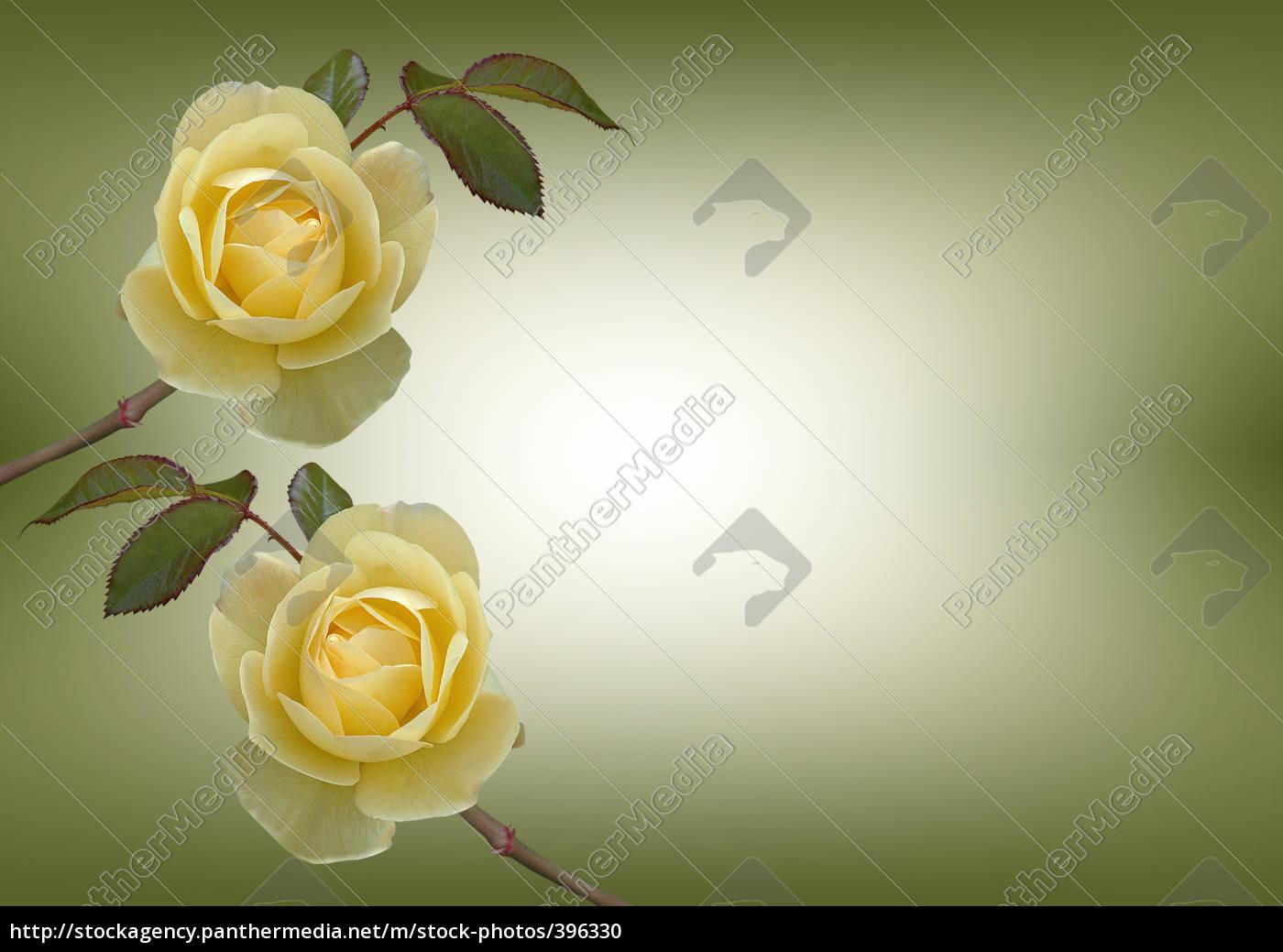 roses, background - 396330