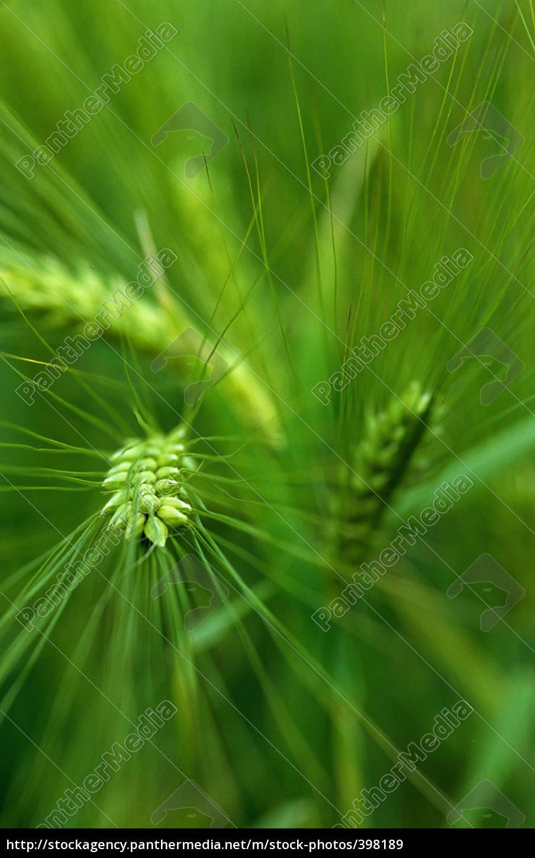 grain - 398189