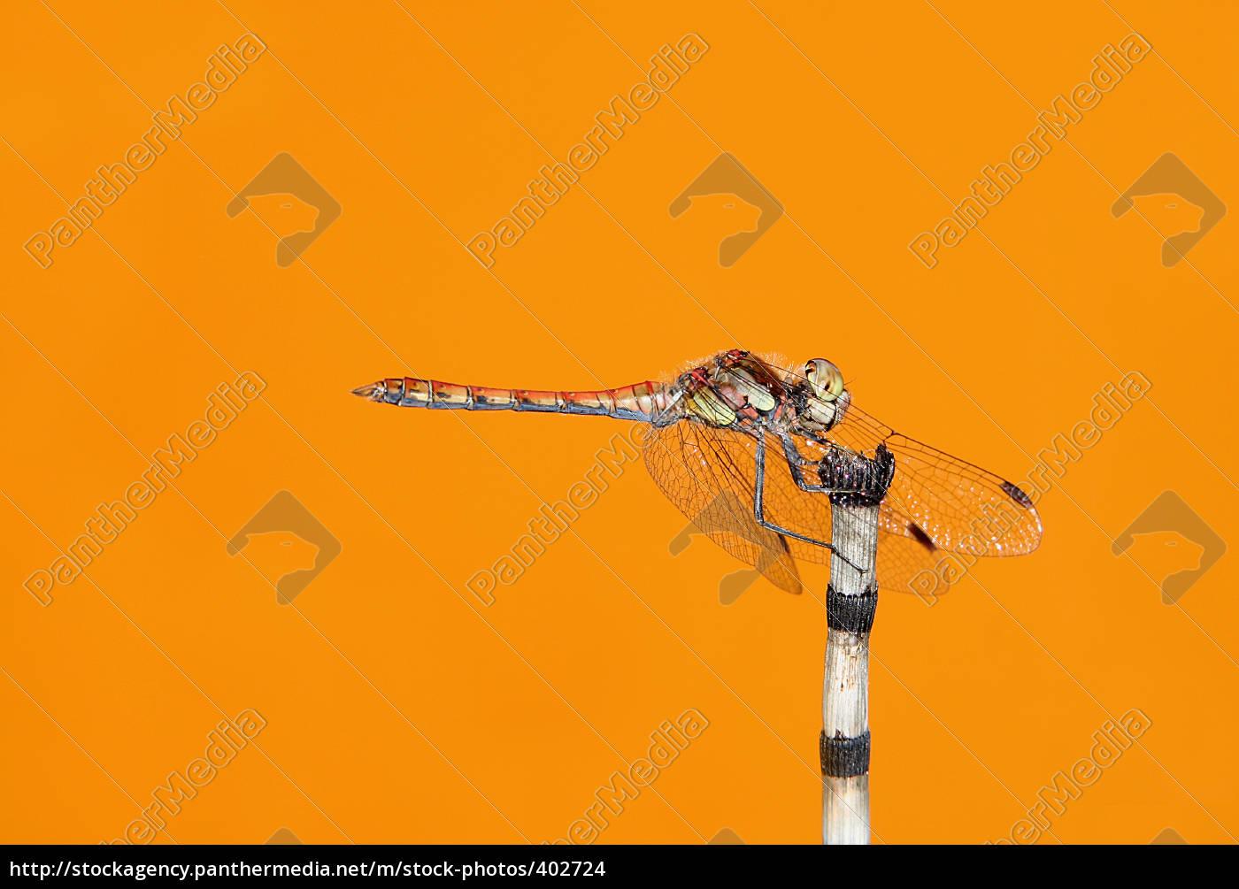 a, dragonfly, was, sitting, on, zebragras - 402724