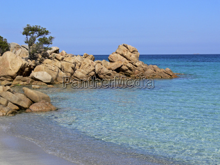 costa smeralda tree on rock