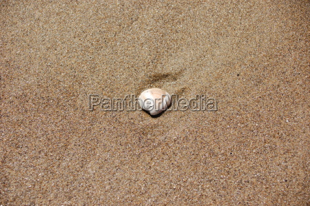 shell, in, the, sand - 409683
