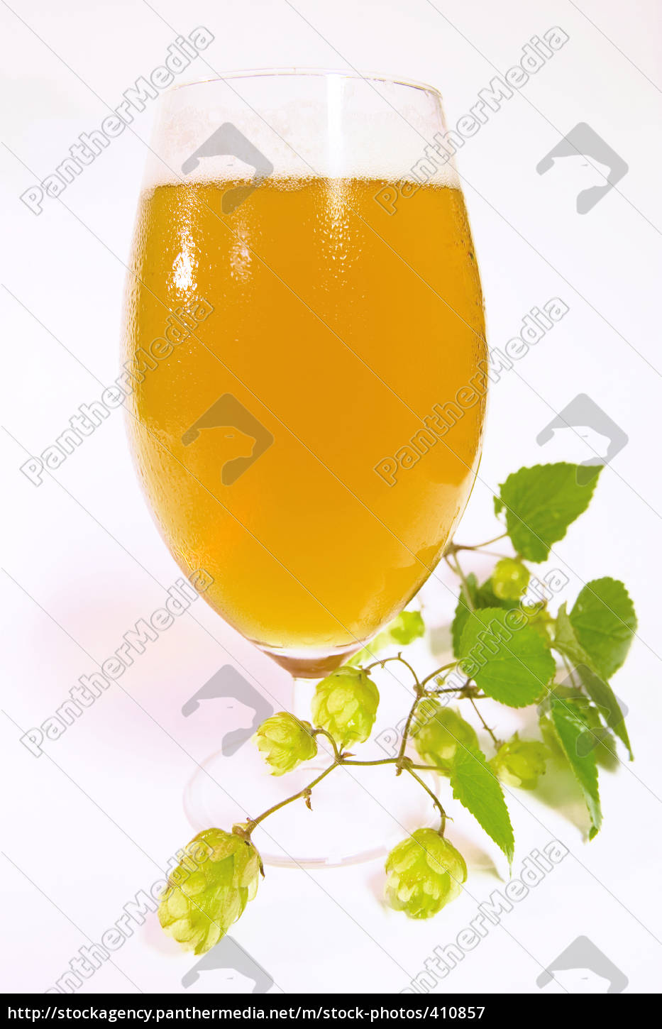 pils, glass, with, hops - 410857