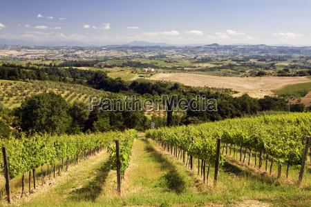 tuscany - 415157