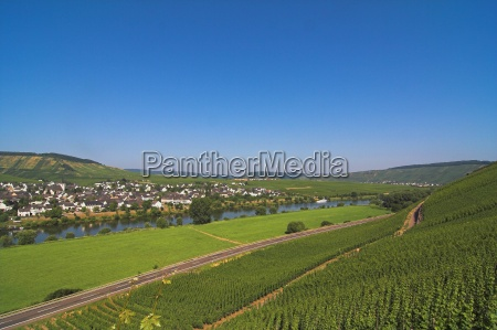blue vineyards summer summerly cultivation of