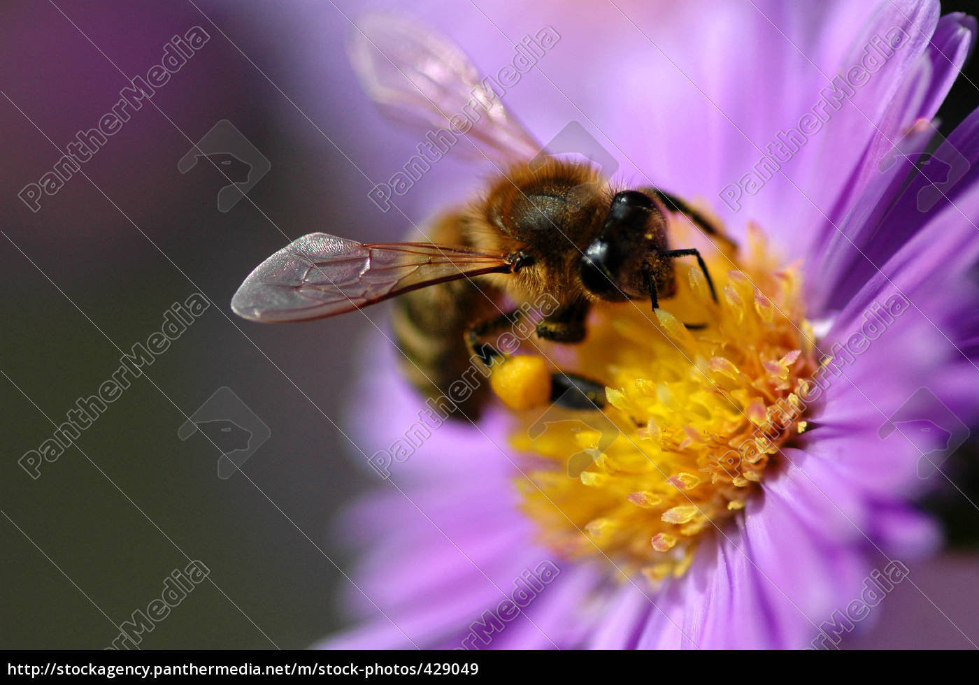 busy, bee - 429049