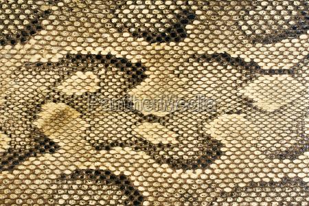 snakeskin - 434892