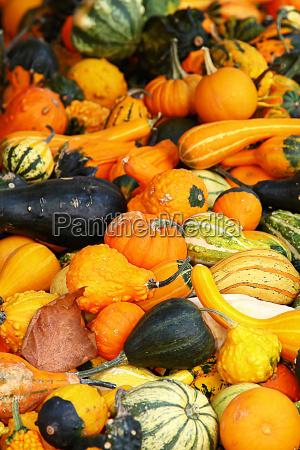 many, colorful, pumpkins - 435707
