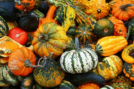 white, pumpkin, in, the, amount - 435614