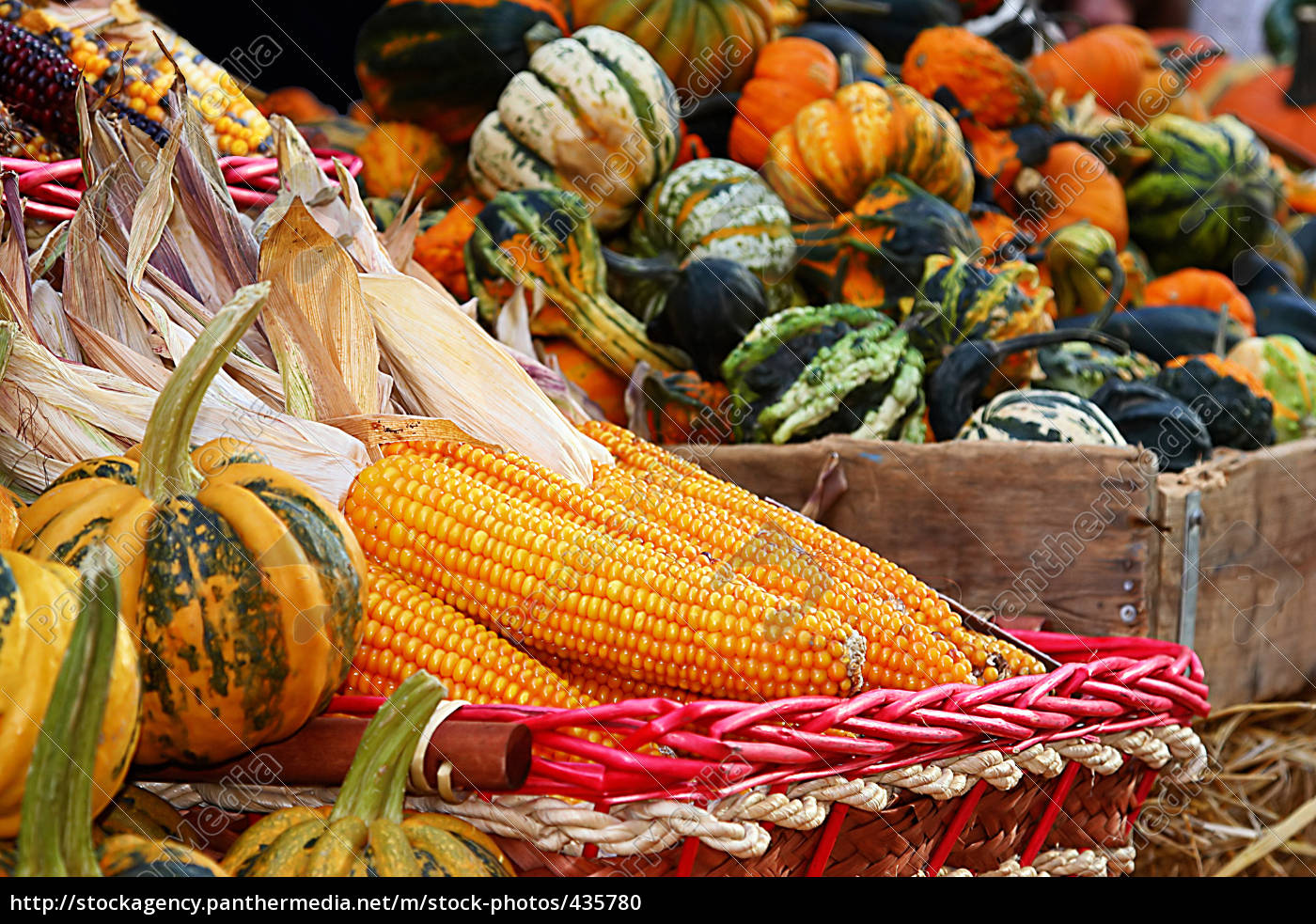 yellow, corn, cobs - 435780