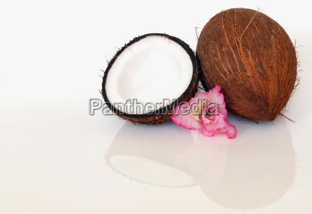 coconut, 1 - 436345