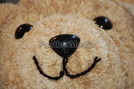 teddy, smile - 437587