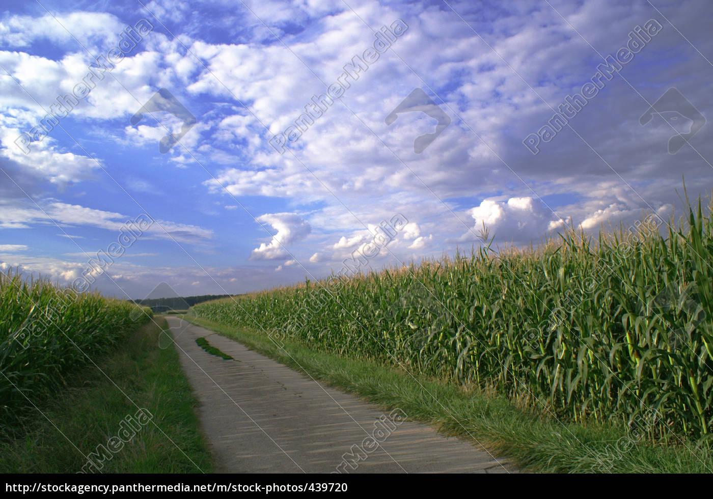 way, through, the, fields - 439720