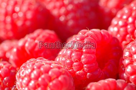 raspberries - 440529
