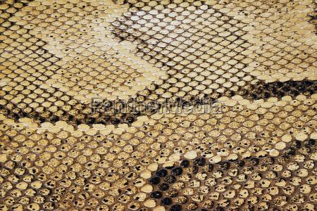 snake, skin, texture - 441507