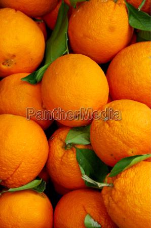 oranges, 001 - 442998
