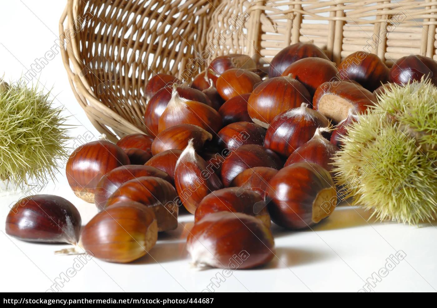 chestnuts, 26 - 444687