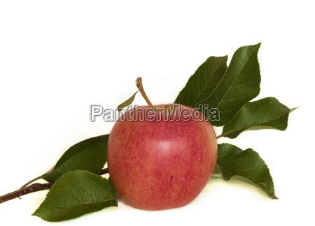 apple - 449198