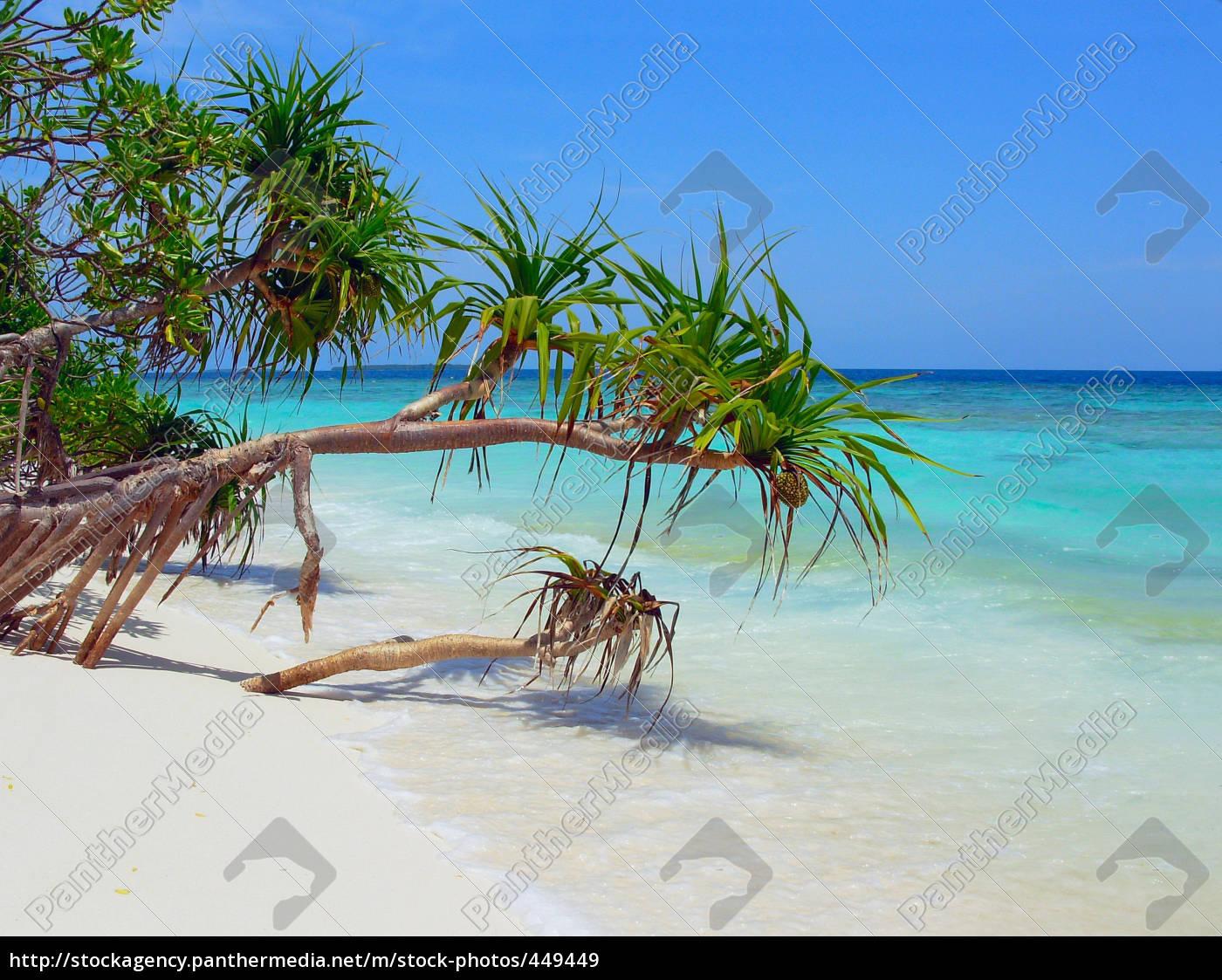 beach, idyll - 449449