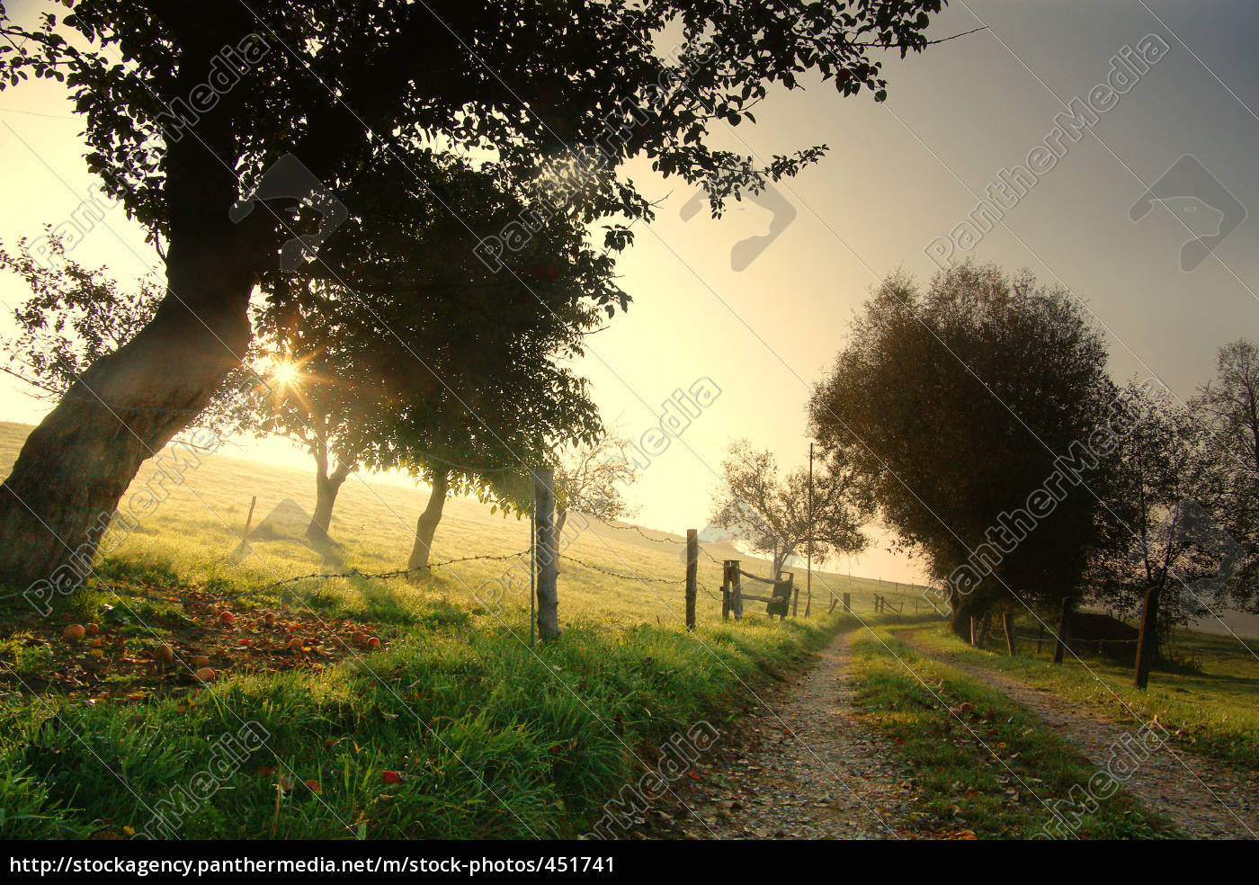dirt, road, in, the, morning - 451741