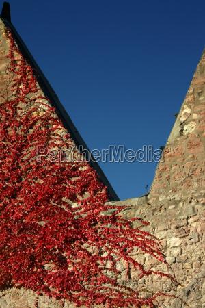 red leaves splendor