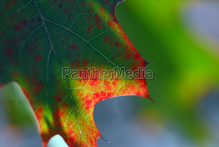 autumn, colors, 03 - 455858