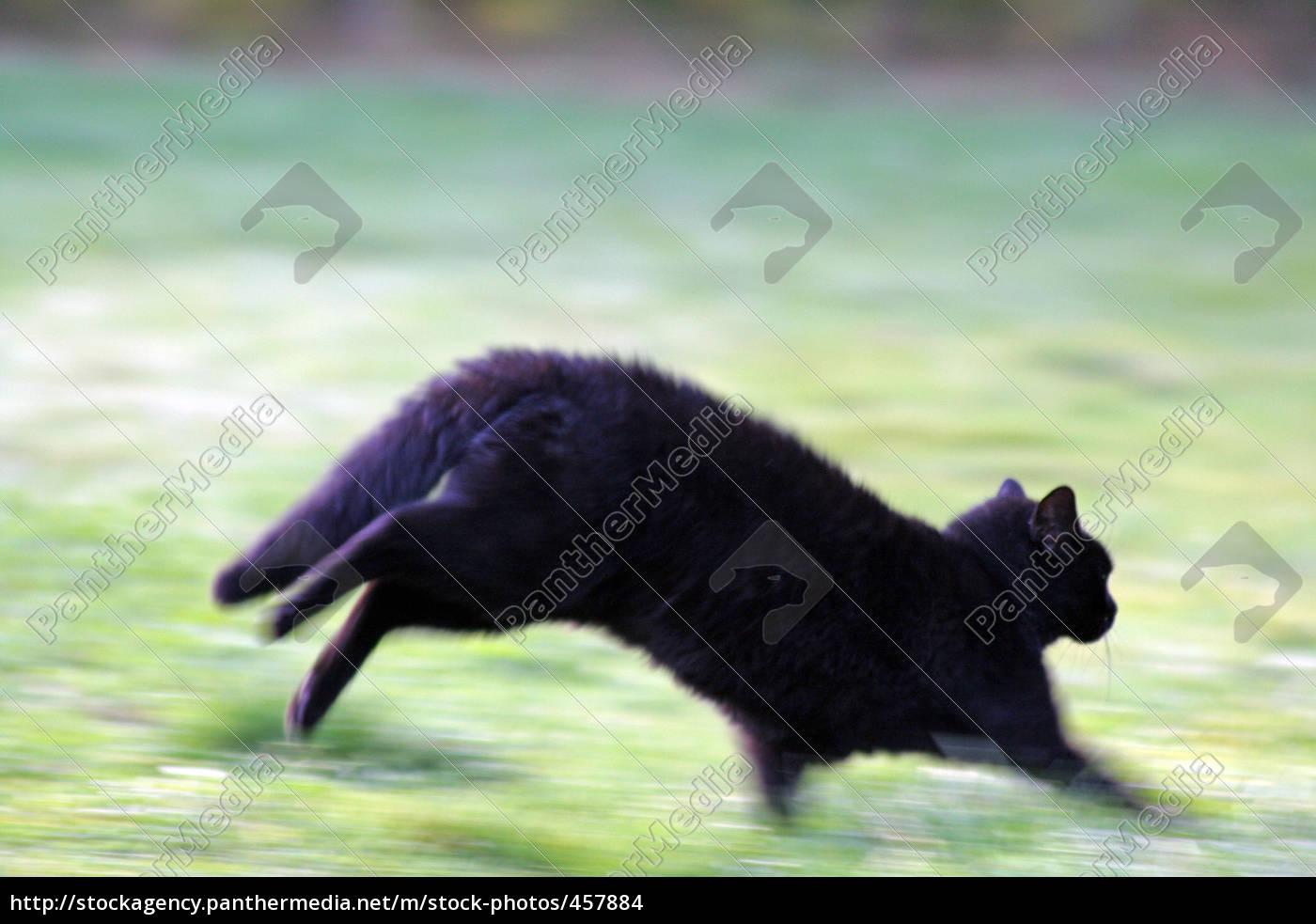 black, cat - 457884