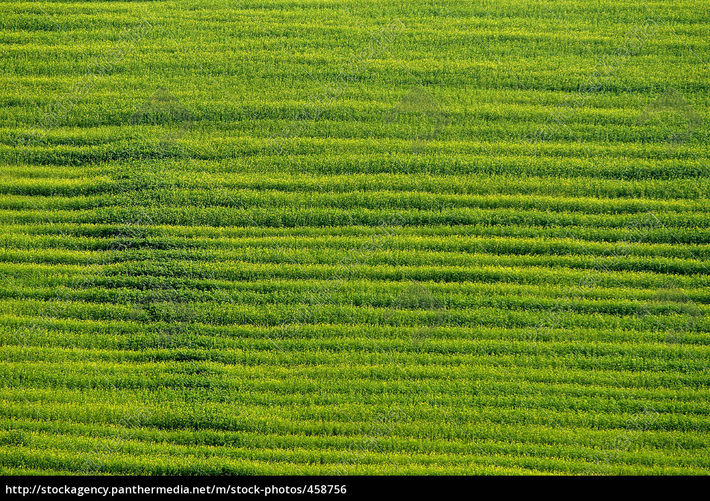 green, meadow, pure - 458756