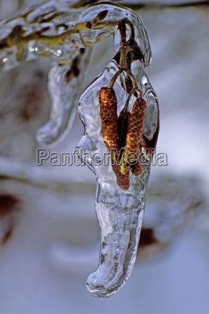 tree, kitten, under, ice - 463414