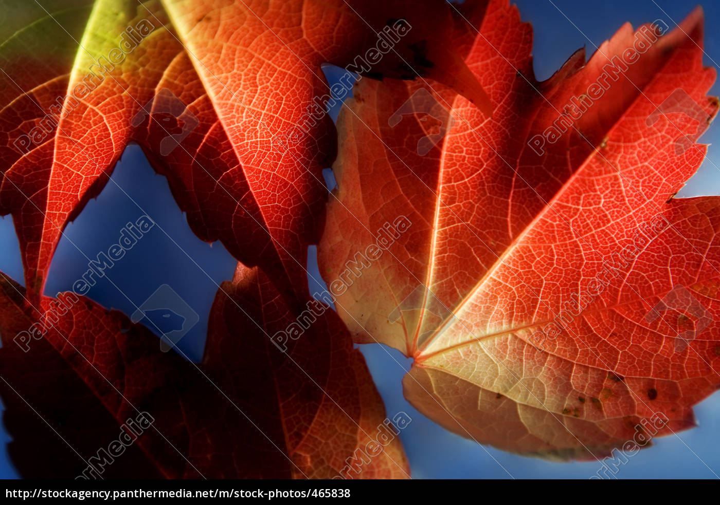 autumn, leaves - 465838