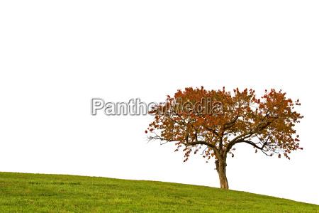 the, tree - 468318