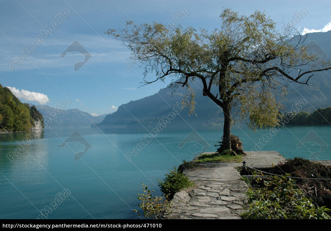 lonely, tree, by, the, lake - 471010