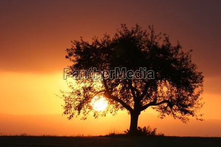 tree, of, life - 474715
