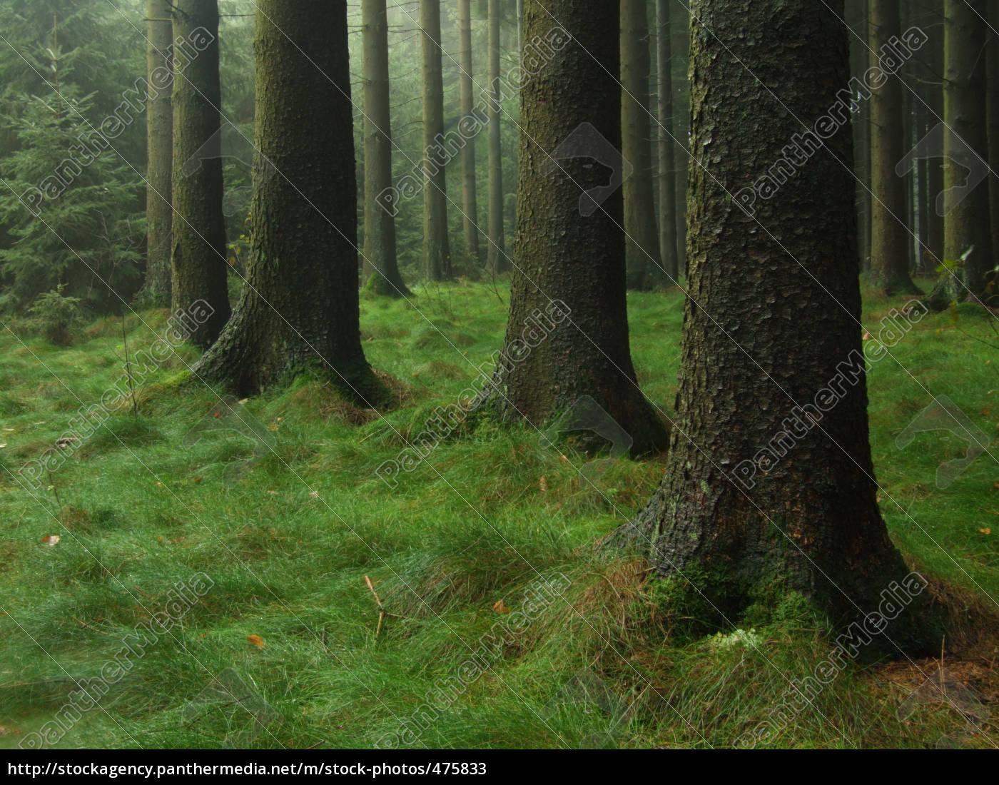 märchenwald, -nadelwald - 475833